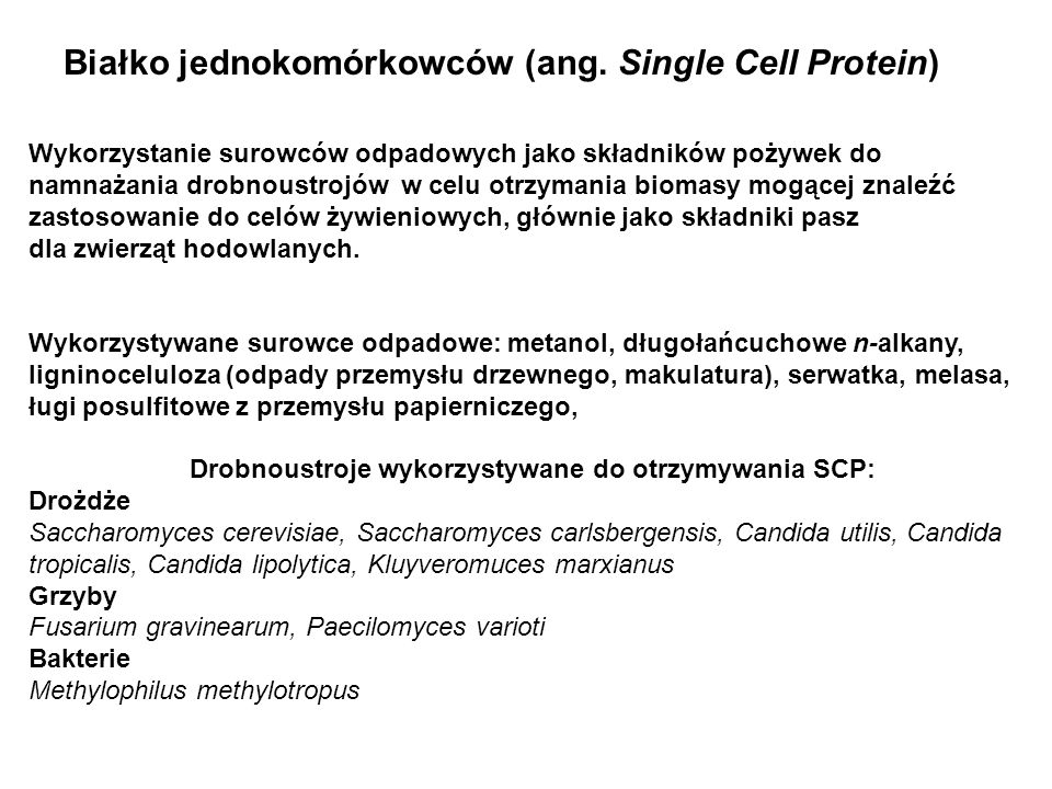 Białko jednokomórkowców (ang. Single Cell Protein)