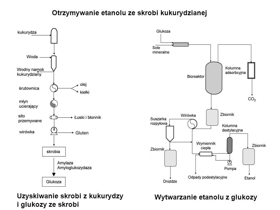 Otrzymywanie etanolu ze skrobi kukurydzianej