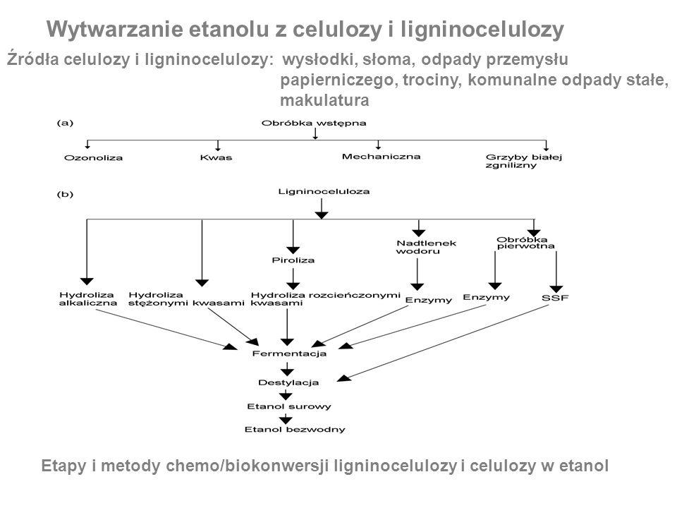 Wytwarzanie etanolu z celulozy i ligninocelulozy