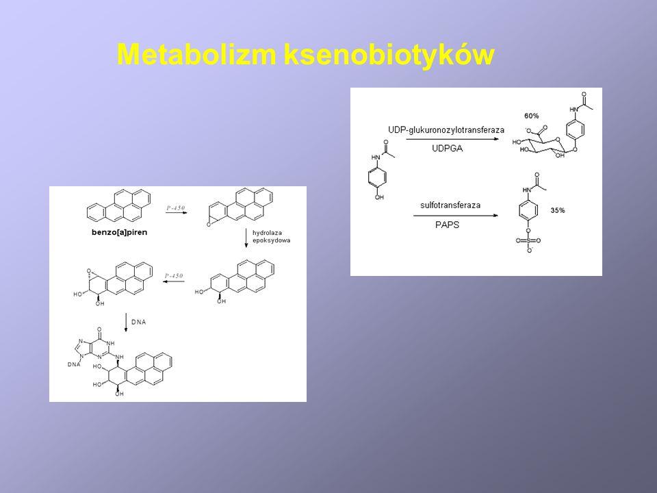 Metabolizm ksenobiotyków