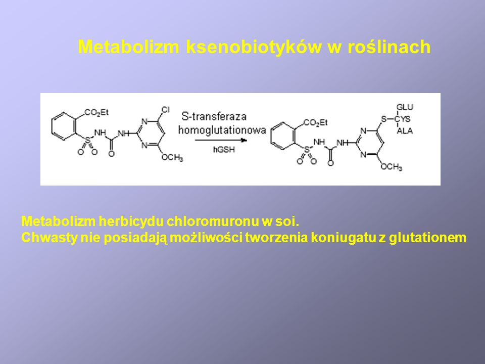 Metabolizm ksenobiotyków w roślinach