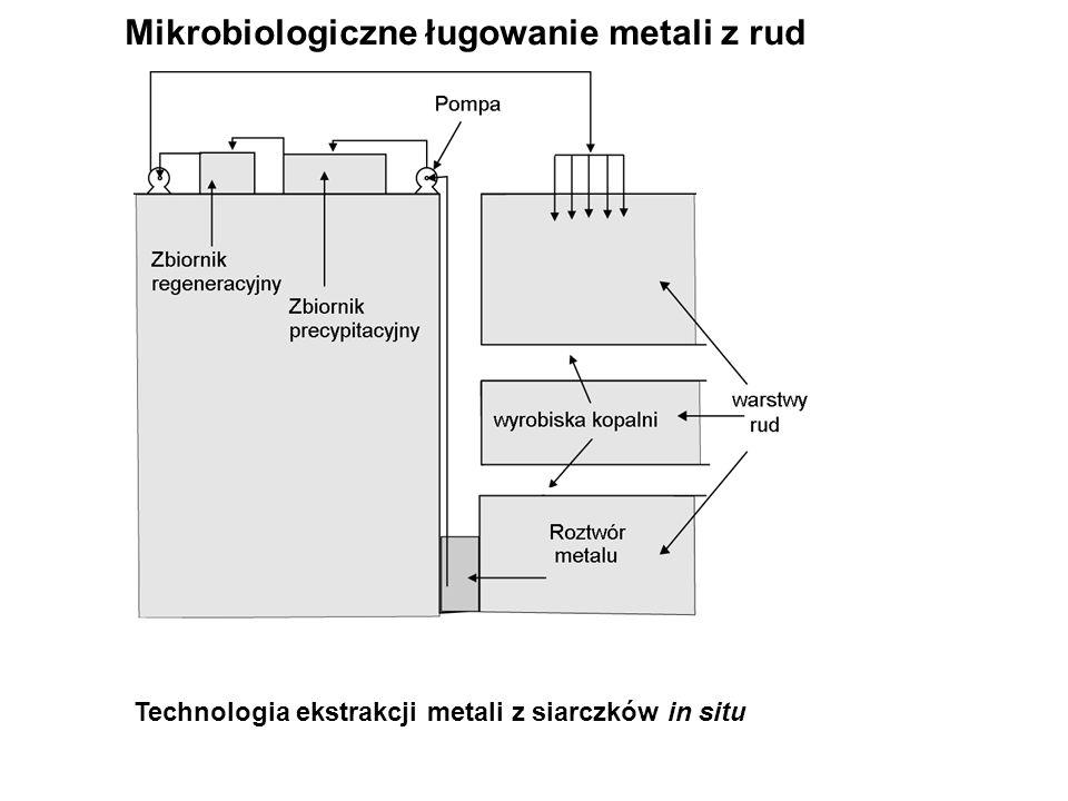 Mikrobiologiczne ługowanie metali z rud