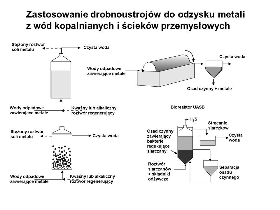 Zastosowanie drobnoustrojów do odzysku metali