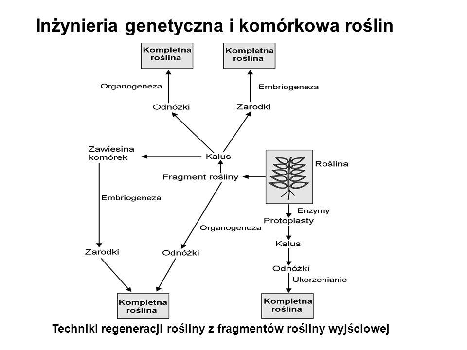 Inżynieria genetyczna i komórkowa roślin