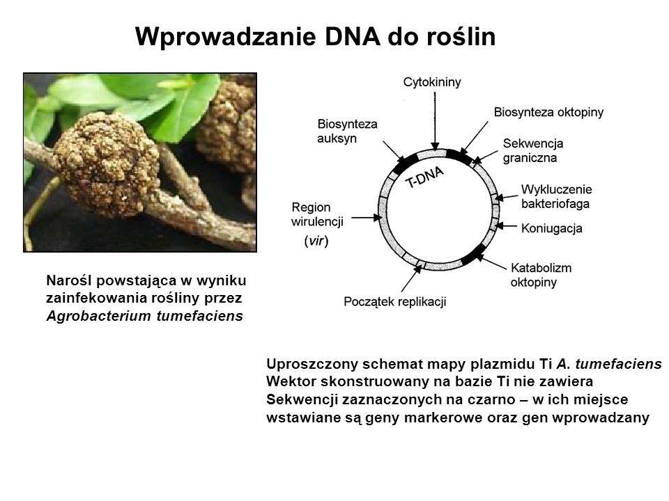 Wprowadzanie DNA do roślin