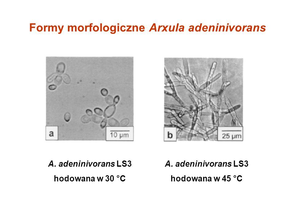 Formy morfologiczne Arxula adeninivorans
