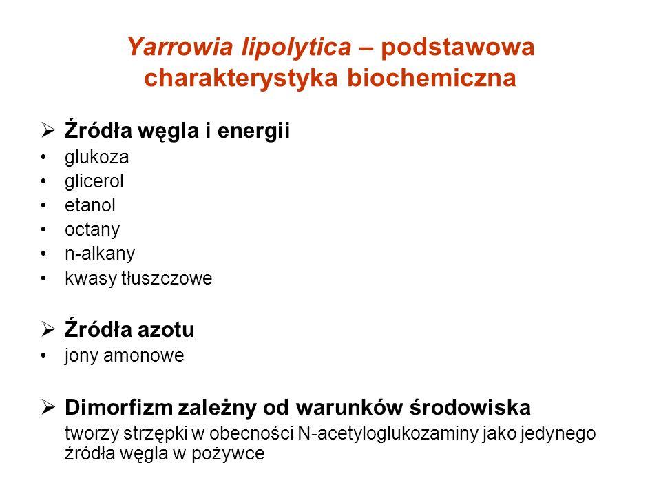Yarrowia lipolytica – podstawowa charakterystyka biochemiczna