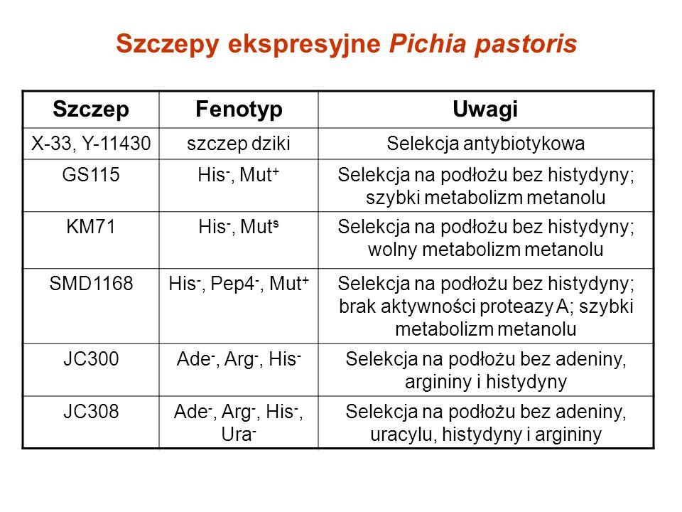 Szczepy ekspresyjne Pichia pastoris