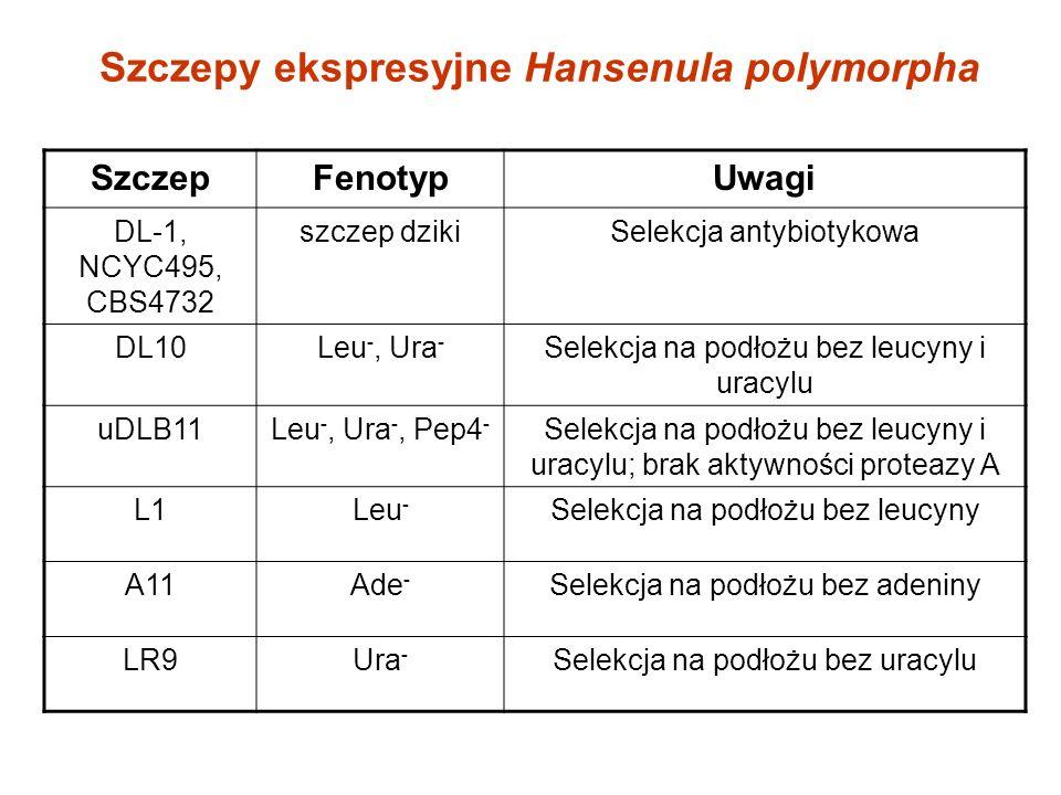Szczepy ekspresyjne Hansenula polymorpha