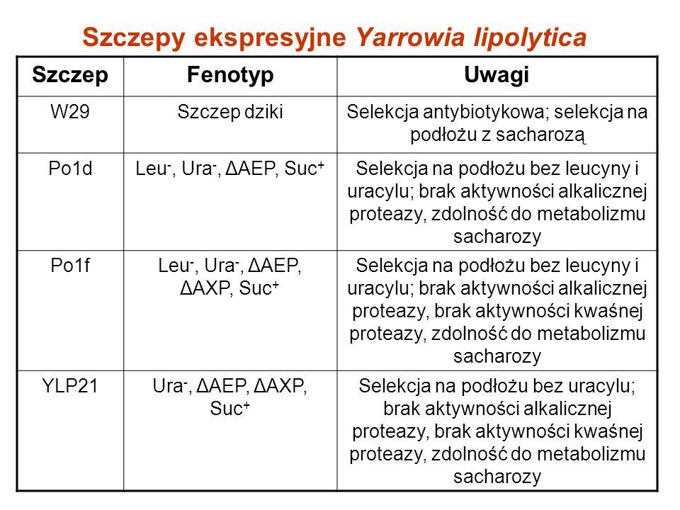 Szczepy ekspresyjne Yarrowia lipolytica