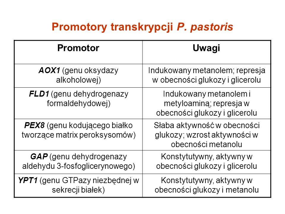 Promotory transkrypcji P. pastoris