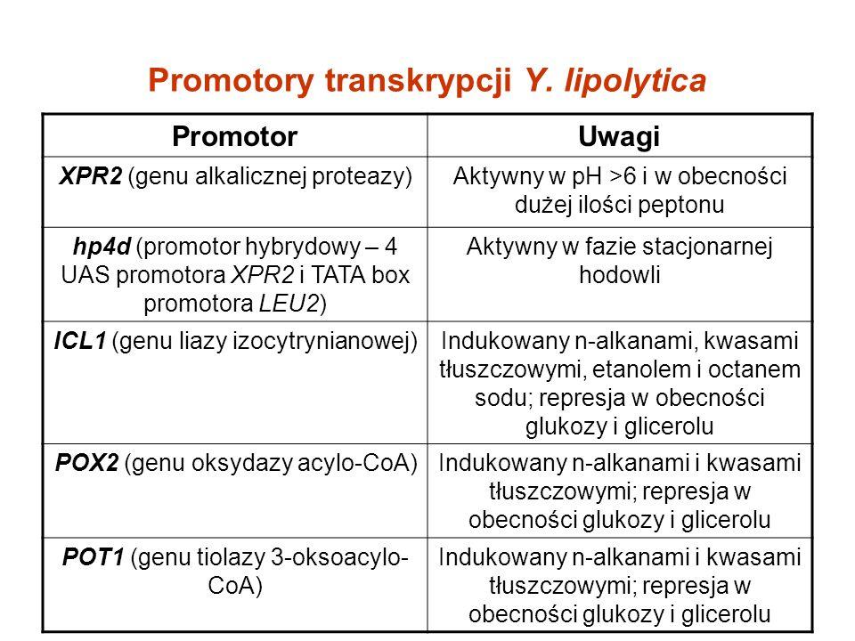 Promotory transkrypcji Y. lipolytica