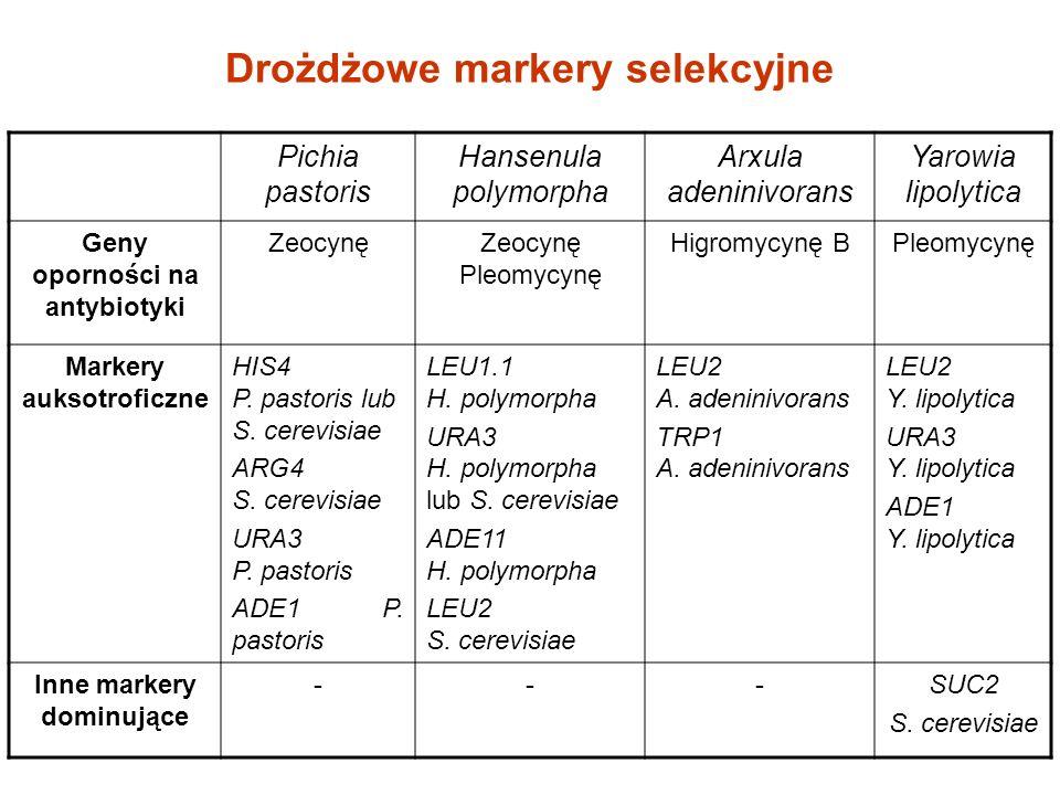 Drożdżowe markery selekcyjne