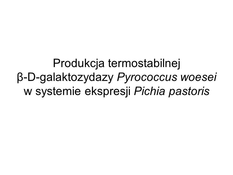 Produkcja termostabilnej β-D-galaktozydazy Pyrococcus woesei