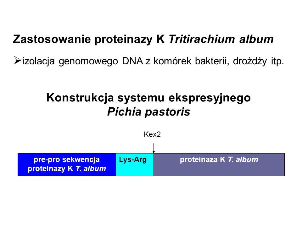 Konstrukcja systemu ekspresyjnego Pichia pastoris