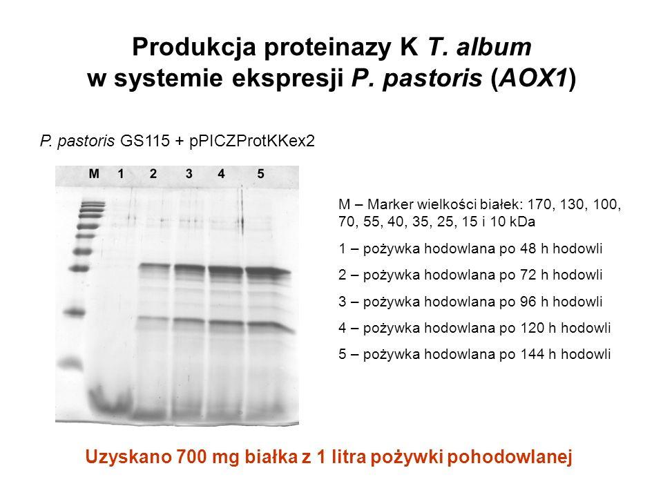 Uzyskano 700 mg białka z 1 litra pożywki pohodowlanej