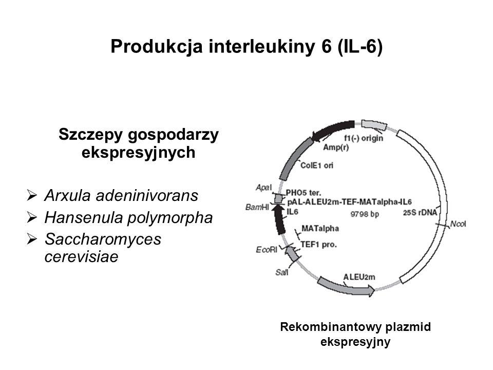 Produkcja interleukiny 6 (IL-6)