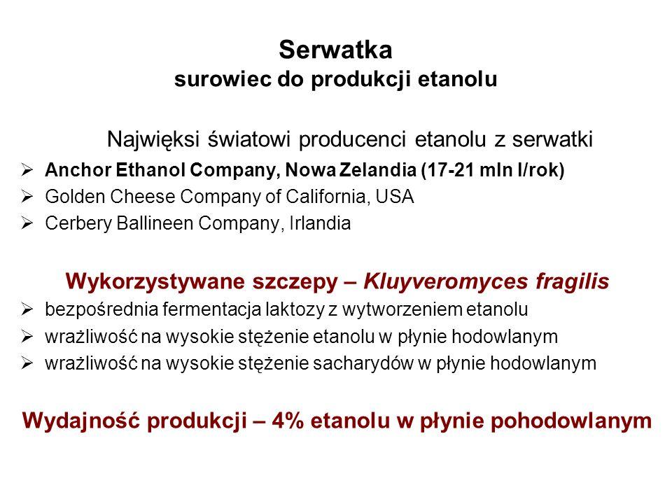 Serwatka surowiec do produkcji etanolu