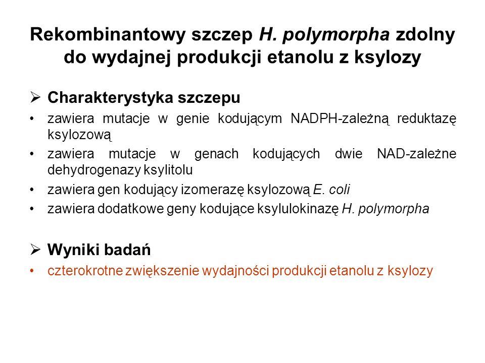 Rekombinantowy szczep H