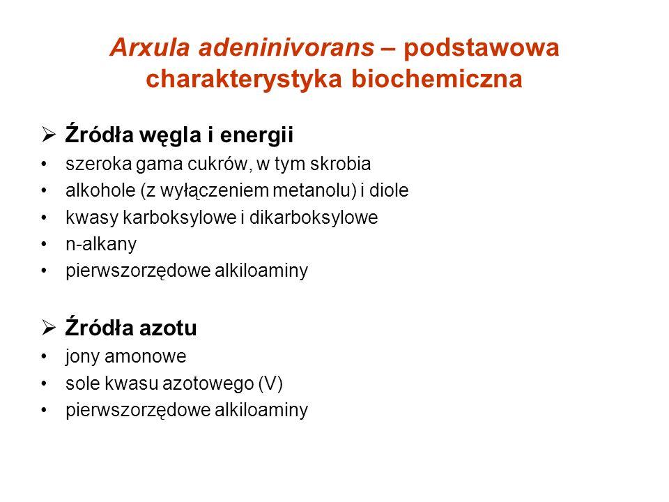 Arxula adeninivorans – podstawowa charakterystyka biochemiczna