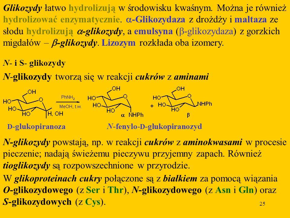 N-glikozydy tworzą się w reakcji cukrów z aminami