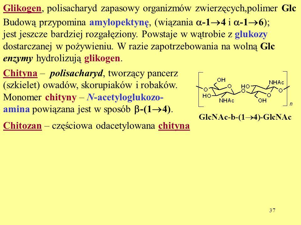 Glikogen, polisacharyd zapasowy organizmów zwierzęcych,polimer Glc