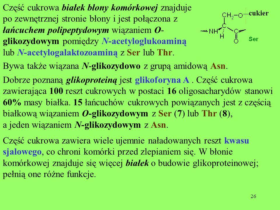 lub N-acetylogalaktozoaminą z Ser lub Thr.