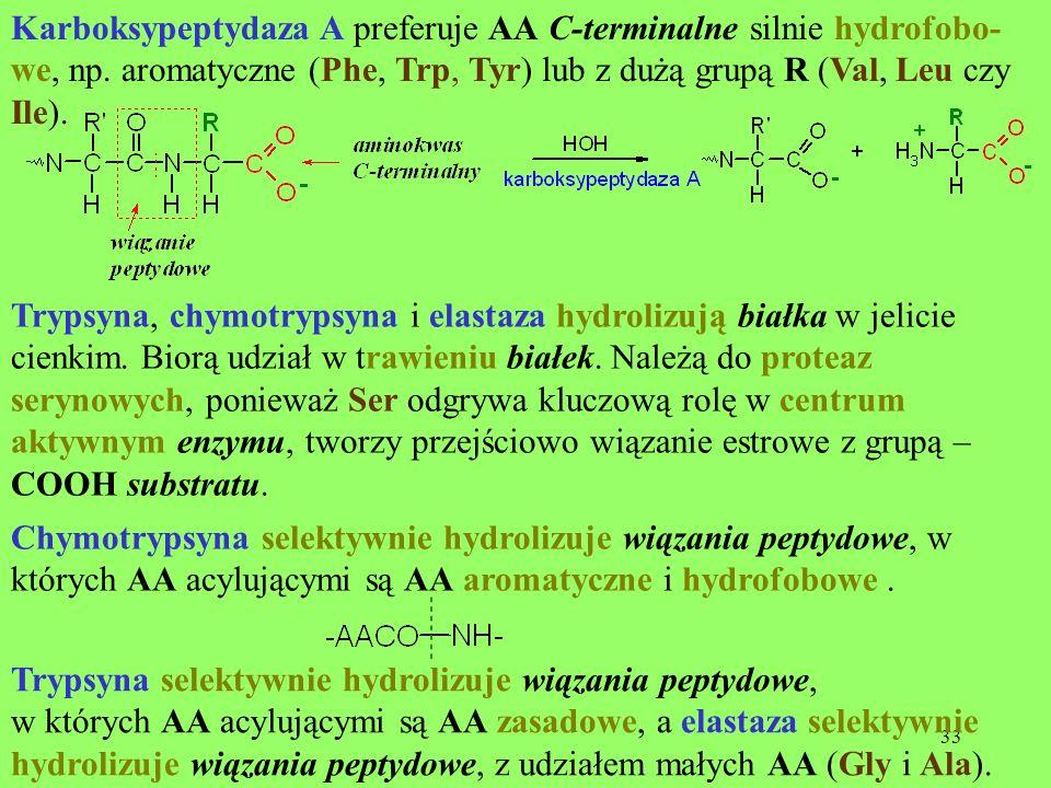 Karboksypeptydaza A preferuje AA C-terminalne silnie hydrofobo- we, np