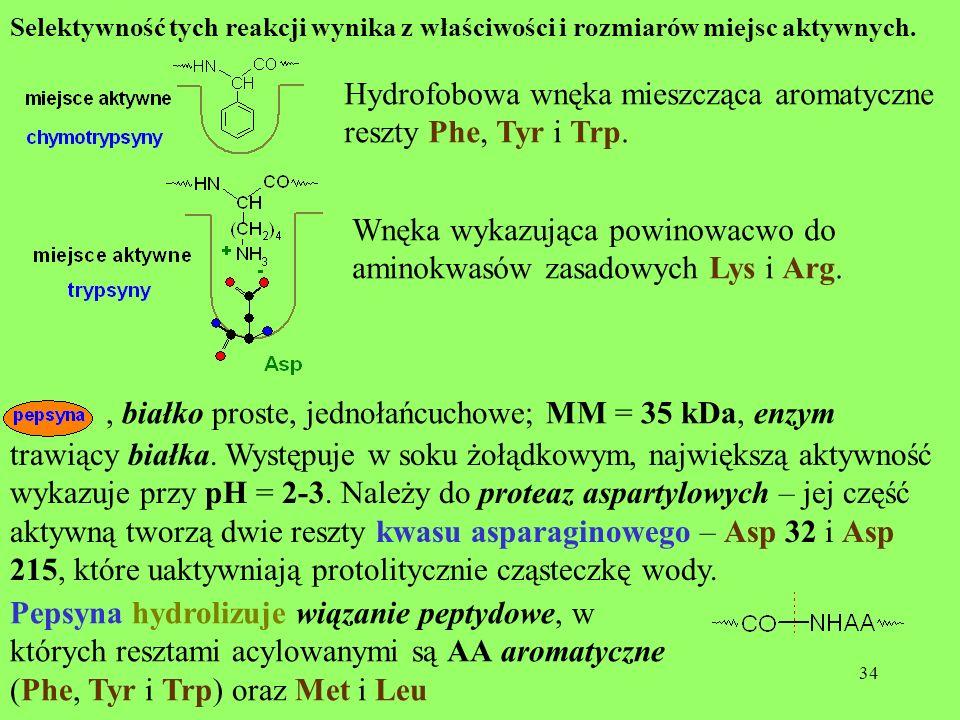Hydrofobowa wnęka mieszcząca aromatyczne reszty Phe, Tyr i Trp.