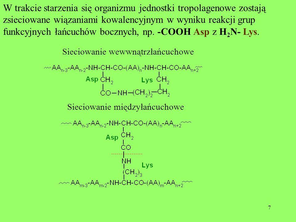 W trakcie starzenia się organizmu jednostki tropolagenowe zostają zsieciowane wiązaniami kowalencyjnym w wyniku reakcji grup funkcyjnych łańcuchów bocznych, np. -COOH Asp z H2N- Lys.