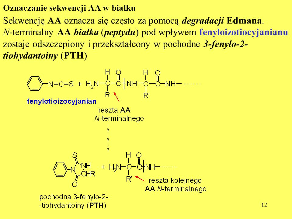 Sekwencję AA oznacza się często za pomocą degradacji Edmana.