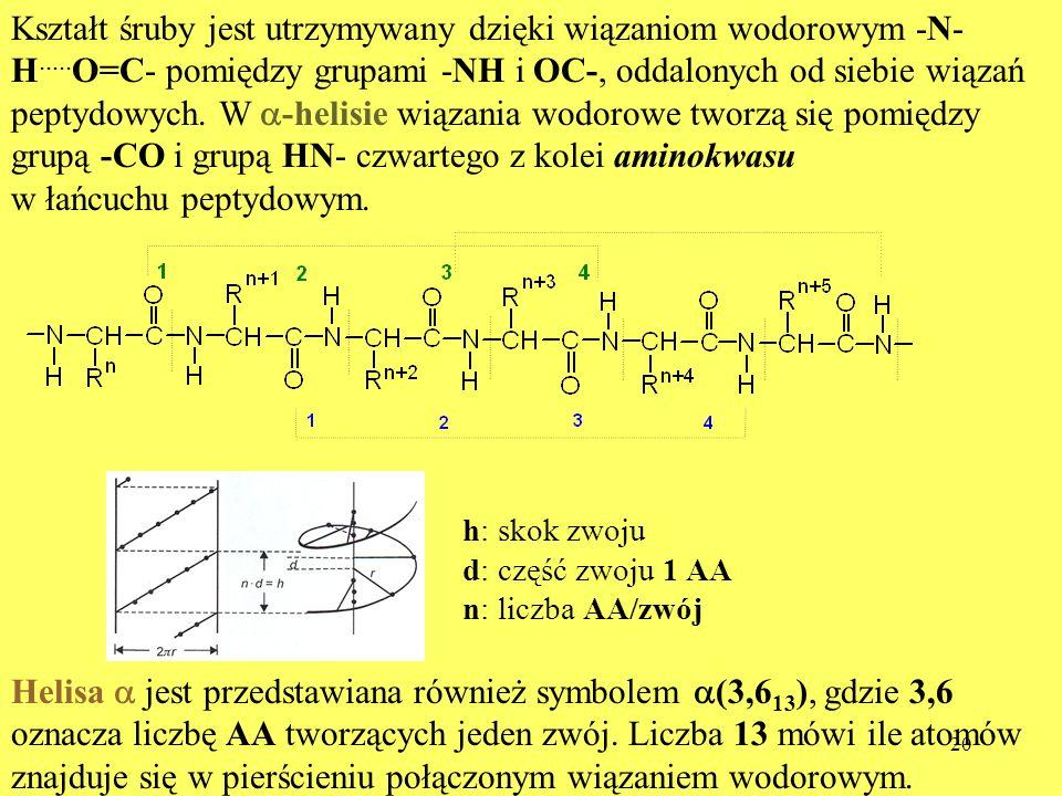 grupą -CO i grupą HN- czwartego z kolei aminokwasu
