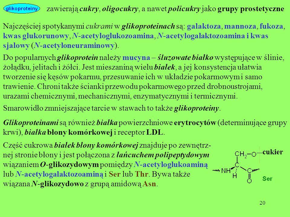 zawierają cukry, oligocukry, a nawet policukry jako grupy prostetyczne