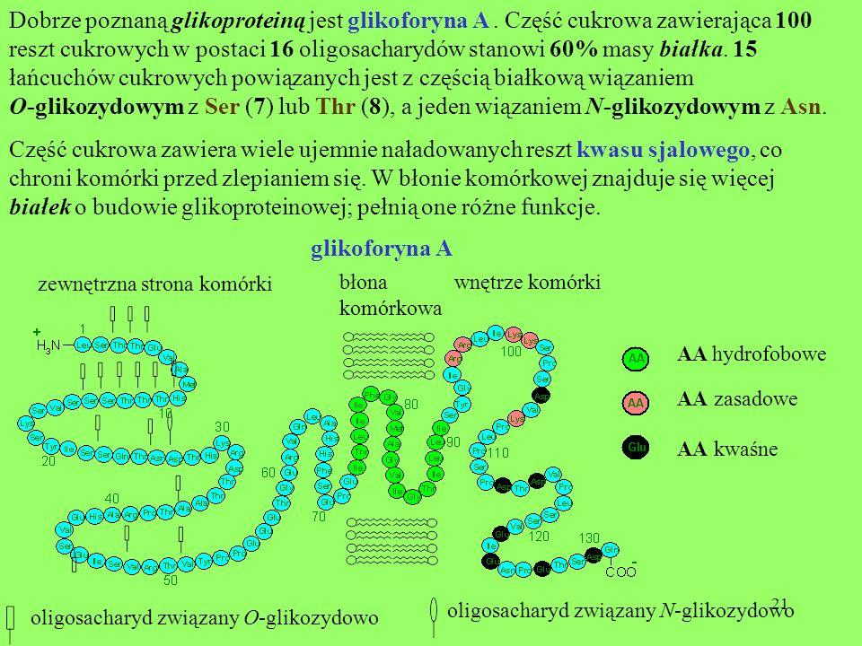 białek o budowie glikoproteinowej; pełnią one różne funkcje.