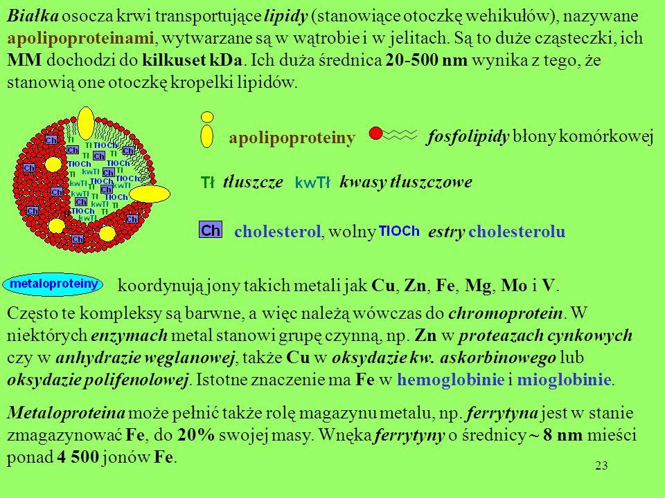 Białka osocza krwi transportujące lipidy (stanowiące otoczkę wehikułów), nazywane apolipoproteinami, wytwarzane są w wątrobie i w jelitach. Są to duże cząsteczki, ich MM dochodzi do kilkuset kDa. Ich duża średnica 20-500 nm wynika z tego, że stanowią one otoczkę kropelki lipidów.