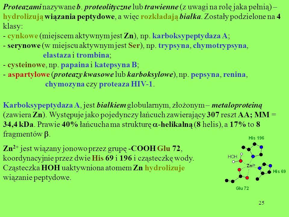 Proteazami nazywane b. proteolityczne lub trawienne (z uwagi na rolę jaka pełnią) – hydrolizują wiązania peptydowe, a więc rozkładają białka. Zostały podzielone na 4 klasy: