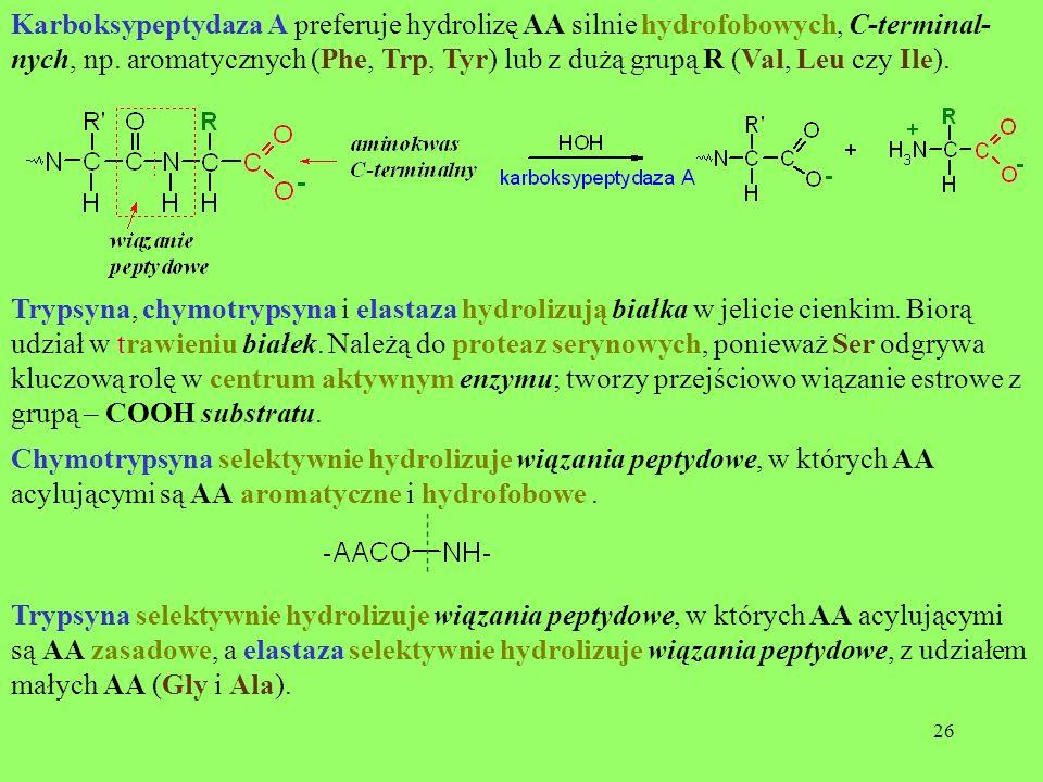 Karboksypeptydaza A preferuje hydrolizę AA silnie hydrofobowych, C-terminal-nych, np. aromatycznych (Phe, Trp, Tyr) lub z dużą grupą R (Val, Leu czy Ile).