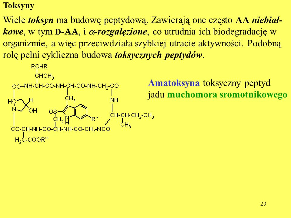 Amatoksyna toksyczny peptyd jadu muchomora sromotnikowego