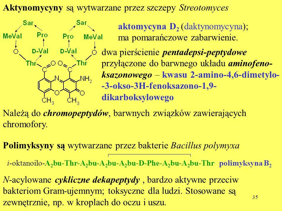 Aktynomycyny są wytwarzane przez szczepy Streotomyces