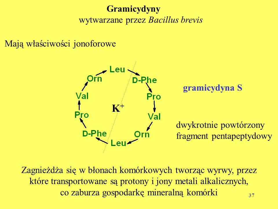 K+ Gramicydyny wytwarzane przez Bacillus brevis