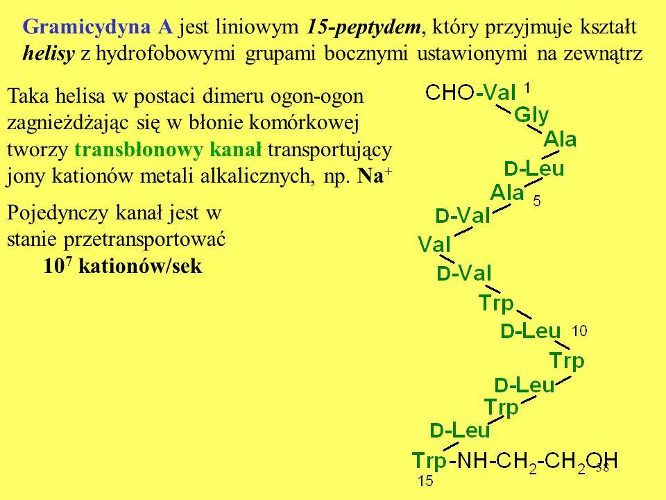 Gramicydyna A jest liniowym 15-peptydem, który przyjmuje kształt helisy z hydrofobowymi grupami bocznymi ustawionymi na zewnątrz