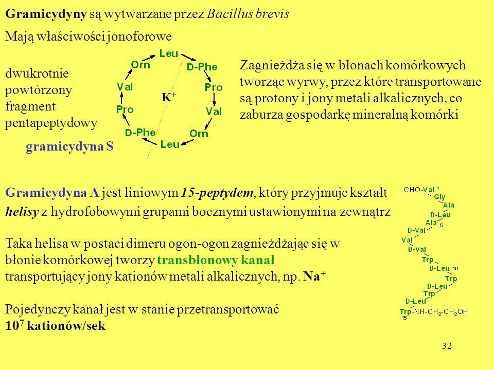 Gramicydyny są wytwarzane przez Bacillus brevis