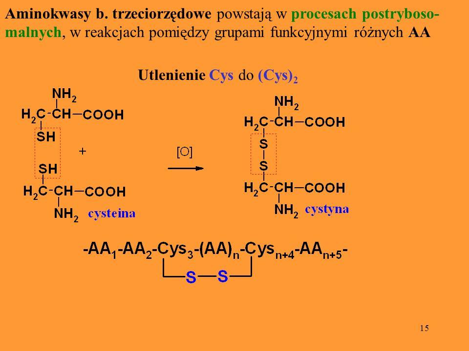 Aminokwasy b. trzeciorzędowe powstają w procesach postryboso-malnych, w reakcjach pomiędzy grupami funkcyjnymi różnych AA