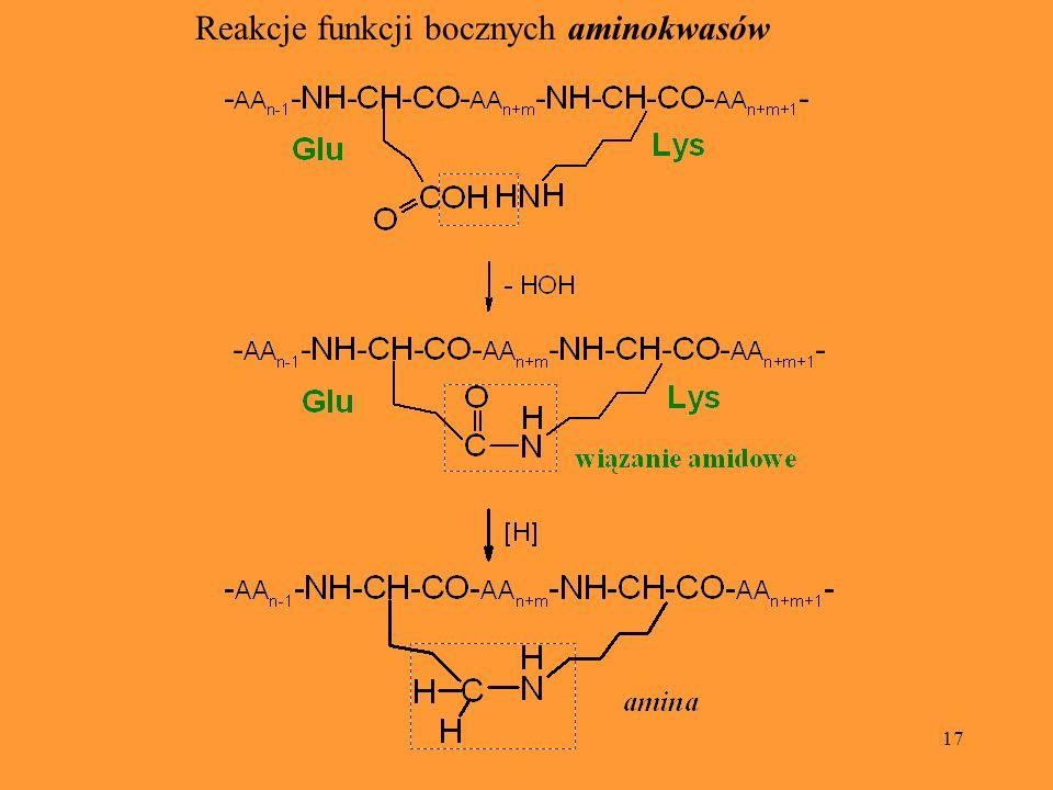 Reakcje funkcji bocznych aminokwasów