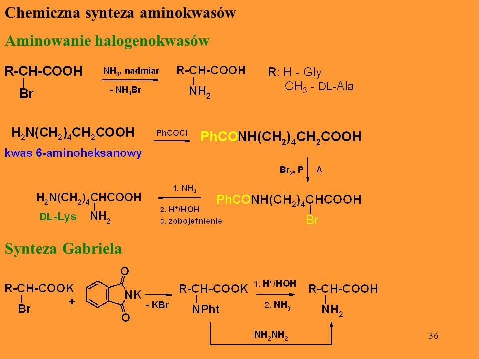 Chemiczna synteza aminokwasów
