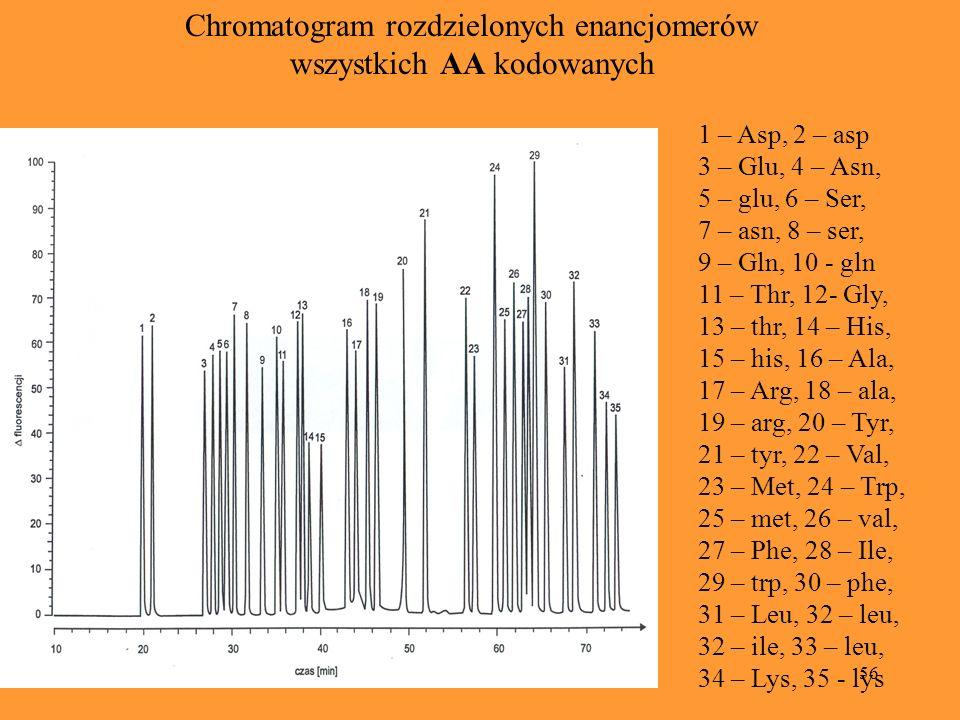 Chromatogram rozdzielonych enancjomerów wszystkich AA kodowanych
