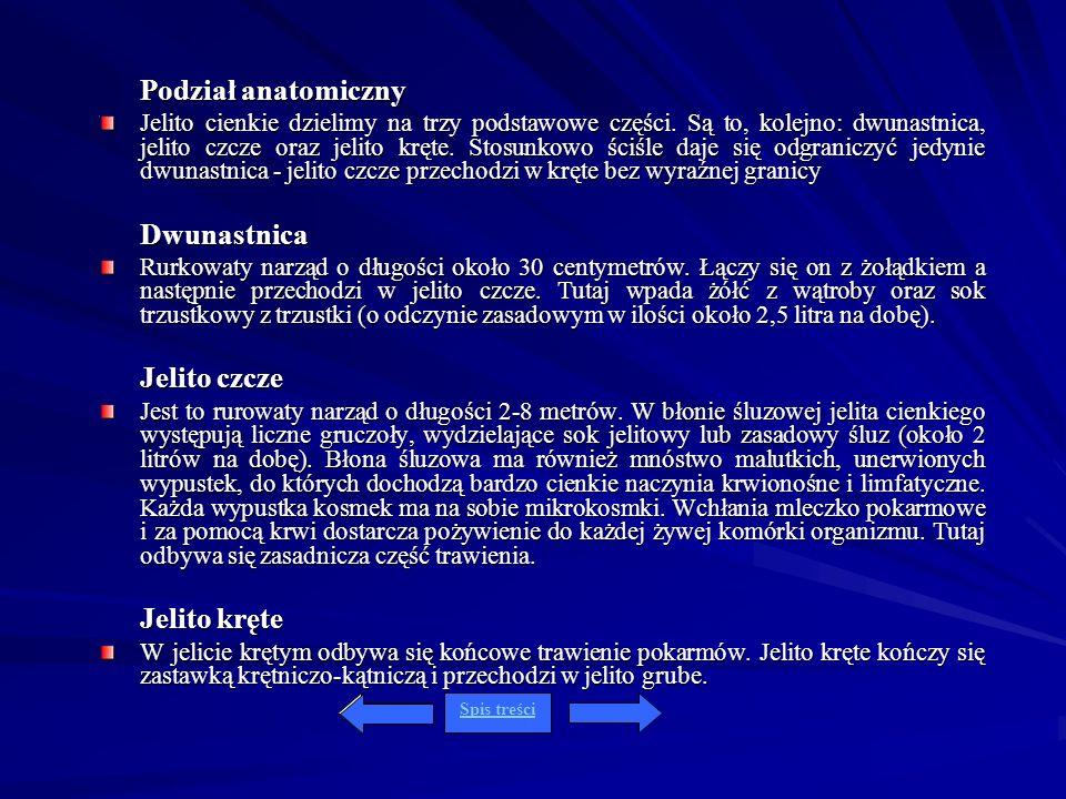 Podział anatomiczny Dwunastnica Jelito czcze Jelito kręte