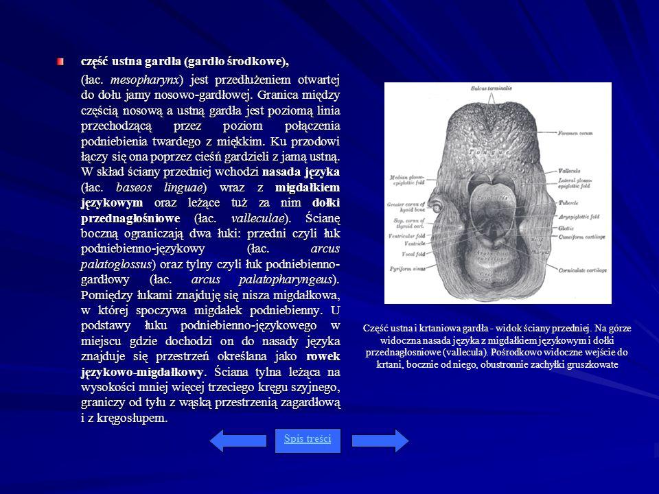 część ustna gardła (gardło środkowe),