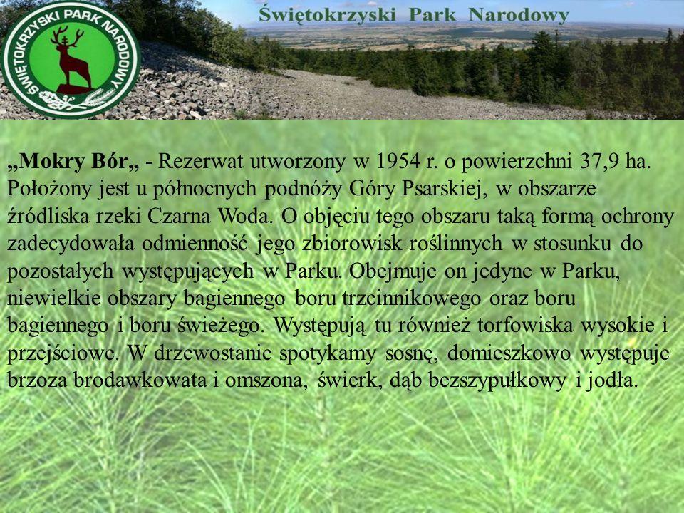 """""""Mokry Bór"""" - Rezerwat utworzony w 1954 r. o powierzchni 37,9 ha"""