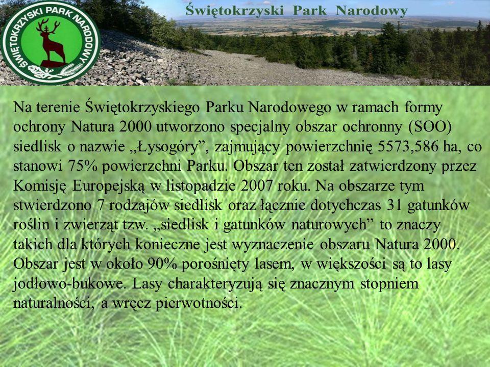 """Na terenie Świętokrzyskiego Parku Narodowego w ramach formy ochrony Natura 2000 utworzono specjalny obszar ochronny (SOO) siedlisk o nazwie """"Łysogóry , zajmujący powierzchnię 5573,586 ha, co stanowi 75% powierzchni Parku."""